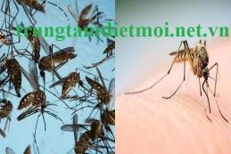 Diệt muỗi tại Bắc Giang – Dịch vụ diệt muỗi hiệu quả tại nhà