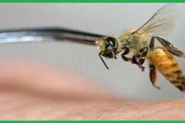 Công ty bắt ong chuyên nghiệp Đà Nẵng