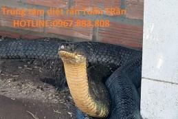 Công ty diệt rắn giá rẻ tại nhà Biên Hòa