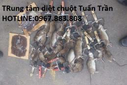Dịch vụ diệt chuột giá rẻ tại thành phố Hồ Chí Minh