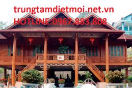 Dịch vụ diệt mối tận gốc tại Tây Ninh