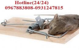 Diệt chuột tại Hải Phòng – Hiệu quả, tận gốc 100%