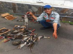 Dịch vụ diệt chuột Bắc Giang