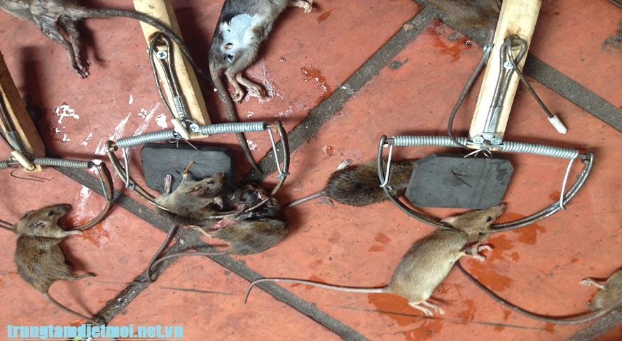 Đơn vị diệt chuột tốt nhất Quảng Trị