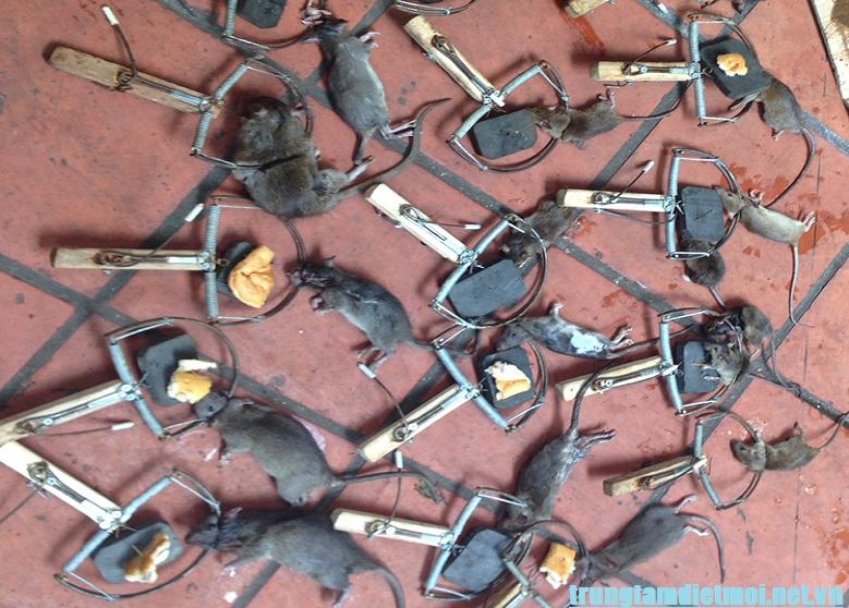 Dịch vụ diệt chuột hiệu quả Đồng Nai