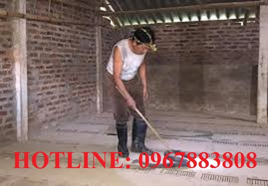 Dịch vụ diệt côn trùng tại TP.HCM