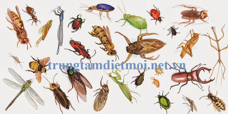 Đơn vị diệt côn trùng tốt nhất Hà Nam