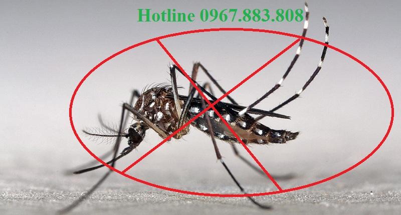 Dịch vụ diệt muỗi tận gốc Thái Nguyên