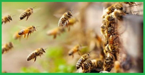Đơn vị bắt gỡ tổ ong tại Cần Thơ