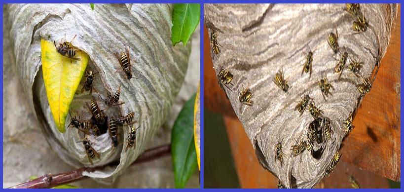 Công ty diệt ong tại TP.HCM