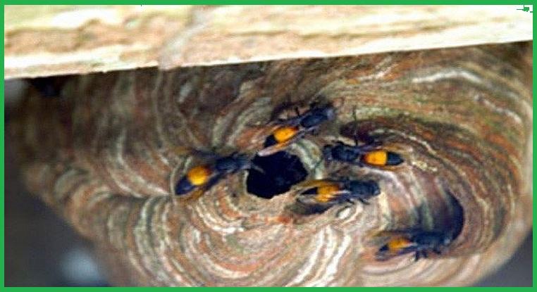 Dịch vụ diệt ong tỉnh Bình Dương