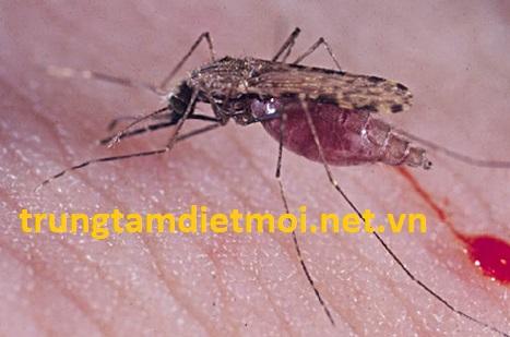 Diệt muỗi tại thành phố Hồ Chí Minh